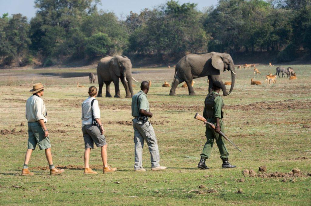 A walking Elephant Safari