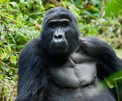 Big Game and Gorillas