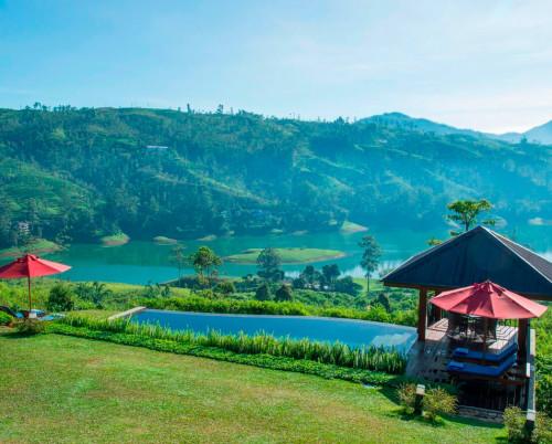 Camellia Hills