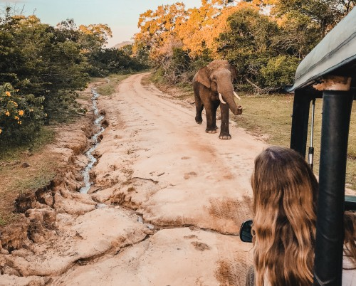 Leopard Trails Yala