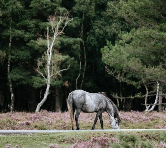 New Forest, United Kingdom (UK)